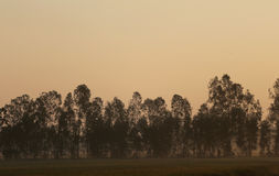 De weiden worden behandeld door grote boom Royalty-vrije Stock Afbeelding