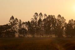 De weiden worden behandeld door grote boom Royalty-vrije Stock Foto's
