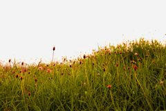 De weiden zijn tot bloei komend in rood stock foto's