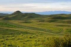 De weilanden van het de zomerpaard in de bergen Stock Fotografie