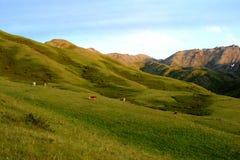 De weilanden van het de zomerpaard in de bergen Royalty-vrije Stock Fotografie