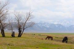 De weilanden van Kazachstan met paarden Stock Foto