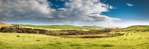De weilandenpanorama van Nieuw Zeeland Stock Fotografie