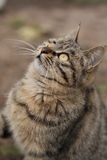 De wens van de kat Stock Fotografie