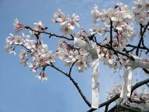 De wensen van de lente stock foto