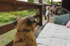 De wereld door de ogen van een hond Royalty-vrije Stock Fotografie