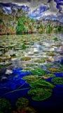 De wereld van het Lillystootkussen Stock Foto's