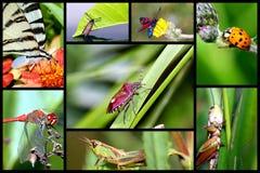 In de wereld van insecten. Stock Afbeelding