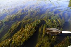 De wereld van installaties onder water dichtbij de oppervlakte van de rivier royalty-vrije stock foto