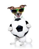 De wereldbekerhond van Brazilië FIFA Stock Foto