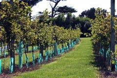 De werf van de wijnstok Royalty-vrije Stock Fotografie
