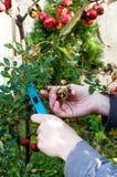 De werken van de herfst in tuin Stock Afbeelding