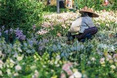 De werken van de tuinmanmens in de witte bloemtuin Royalty-vrije Stock Foto