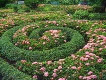De wervelende groene struiken van de bloemtuin Stock Fotografie
