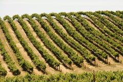De werven van de wijn Royalty-vrije Stock Foto's