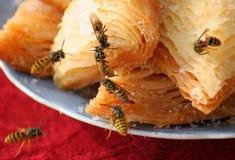 De wesp eet snoepjes Stock Foto