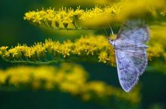 De wesp verzamelt de nectar op de bloemen royalty-vrije stock foto