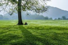 De westelijke kant van de Savanne van het Koningin` s Park in Haven - van - Spanje, Trinidad één vroege ochtend Stock Foto's