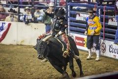 De westelijke Voorraad toont in Denver Stock Fotografie