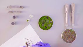 De wetenschapper die steekproeven van petrischaal nemen stock footage