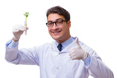 De wetenschapper met groene die zaailing in glas op wit wordt geïsoleerd Royalty-vrije Stock Foto's