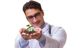 De wetenschapper met groene die zaailing in glas op wit wordt geïsoleerd Stock Afbeeldingen