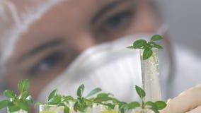 De wetenschapper onderzoekt installaties in reageerbuizen stock video