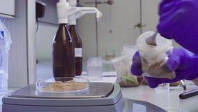 De wetenschapper ` s overhandigt wegende grondsteekproef stock videobeelden