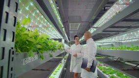 De wetenschappers bij de moderne landbouwproductie bespreken het succes van het kweken van ziekte-bestand installaties Hydrocultu stock footage