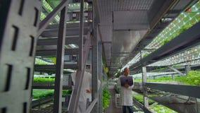 De wetenschappers in witte lagen met een tablet bespreken onderzoek bij het kweken van verse gezonde installaties zonder GMOs op  stock videobeelden