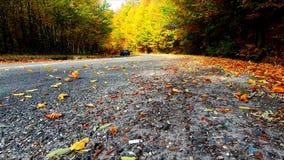 De wielen van de auto bewegen omhoog de bladeren op de weg stock videobeelden