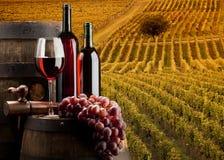 De wijn Stock Afbeeldingen