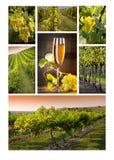 De wijn van het mozaïek Royalty-vrije Stock Foto