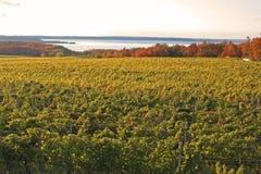 De wijngaard Royalty-vrije Stock Fotografie