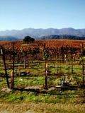 De wijngaard Royalty-vrije Stock Afbeeldingen