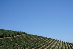 De wijngaard bij Tokara-Wijnlandgoed, Cape Town, Zuid-Afrika, op een duidelijke dag wordt genomen die De wijnstokken worden gepla stock afbeelding