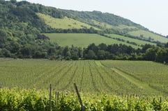 De wijngaard bij voet het Noorden verslaat. het UK Stock Foto's