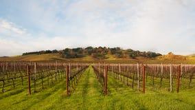 De Wijngaard die van de winter op de Lente wacht Stock Afbeeldingen