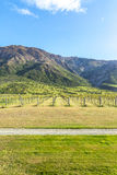 De Wijngaard en de Bergen van Nieuw Zeeland Stock Afbeelding
