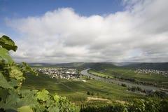 De wijngaard Mossel stock foto