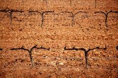De wijngaard outumn droog gebied van de druif Stock Afbeeldingen