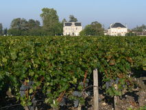 De Wijngaard van Bordeaux Stock Fotografie