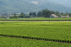 De wijngaard van Californië royalty-vrije stock afbeelding