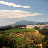De wijngaard van Californië Stock Afbeeldingen