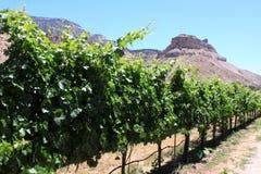 De Wijngaard van Colorado Stock Fotografie