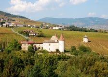 De wijngaard van de Beaujolais, Frankrijk stock afbeeldingen