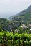 De wijngaard van de helling in Ravello Royalty-vrije Stock Fotografie
