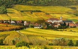 De Wijngaard van de herfst Royalty-vrije Stock Foto's