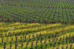 De Wijngaard van de Vallei van Napa Royalty-vrije Stock Foto's