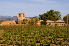 De wijngaard van de Vallei van Napa bij zonsondergang Royalty-vrije Stock Fotografie
